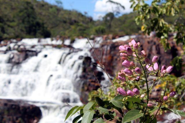 cachoeira almacegas 1000 - catarata dos couros